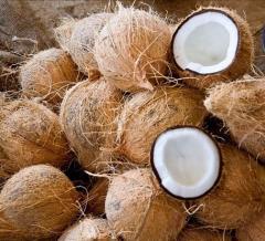 Fresh Organic Matured Coconut