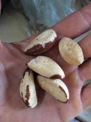 High Quality Raw Brazil Nuts