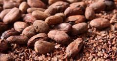 High Grade Cocoa Beans and Cocoa Nibs