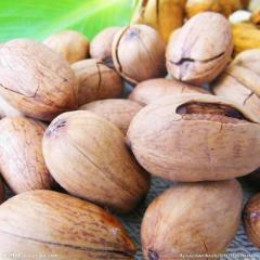 Certified Pecan Nuts / Pecan Nuts for sale/ Pecan Nuts best price