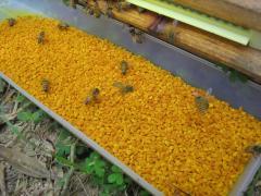 Peffer Organic bee pollen / wholesale bee pollen / wholesale bulk bee pollen