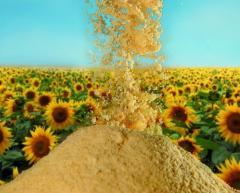 Sunflower Lecithin Powder/ Soybean Lecithin Powder