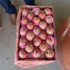 Fresh Soursop / Graviola Fruit / Fresh Watermelon / Fresh Apple / All Types of Fruit