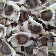 Moringa Oleifera Seeds / Moringa Seed Best Price