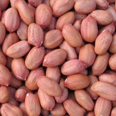 Peanuts/ Blanched Peanuts/ Roasted Peanuts/ Raw Peanuts/ Dried Peanuts