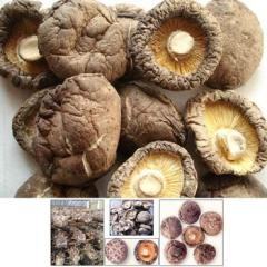 Dried and frozen mushroom