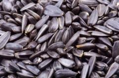 Sunflower Seeds/ Safflower Seeds