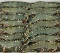 High quality seafood frozen fish/Shrimp/crab/Calamari