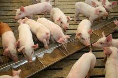 Soybean Meal (Animal Feed & Organic