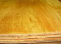 Fresh log timber veneer