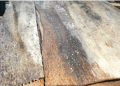 Stale log timber veneer