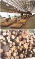 Bintagor Wood