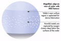 Magic Denuded Zone Wafer