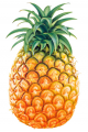 Tropical Fruits Pineapple (Ananas Comosus)