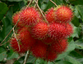 Exotic Fruits Rambutan (Nephelium Lappaceum)