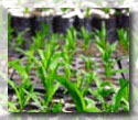Order Precision Agriculture Services