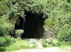 Sepilok Orang Utan / Gomantong Caves/ Kinabatangan River / Sukau Tour